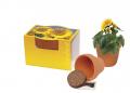 Mini-Sonnenblumentöpfchen 25er Set